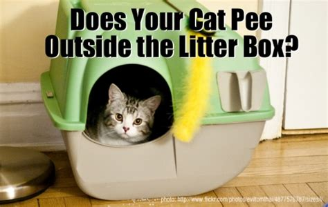 Cat Stool Outside Of Litter Box by Design Trends Categories Scary Diy