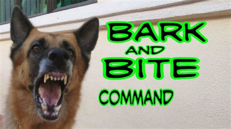 how to your to bite on command german shepherd bark and basic bite command