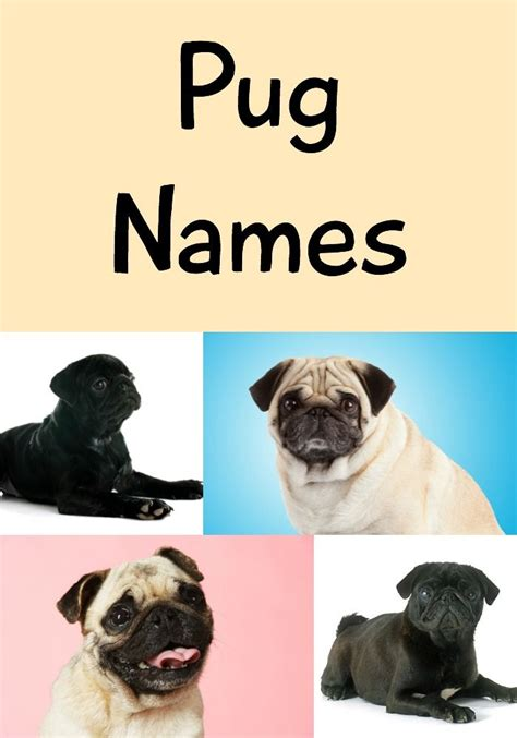 unique pug names 26 best images about names on supplies and best food brands