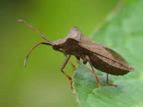 ecole de puxieux l insecte de notre jardin