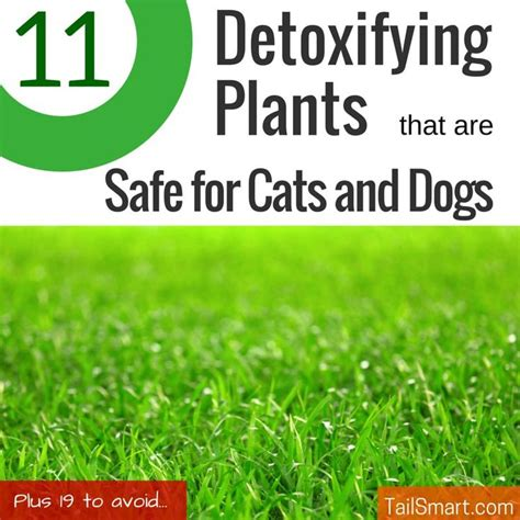 Wouldn T A Detox Kill Horsetail by 1000 Ideas About Plants On Hedera Helix