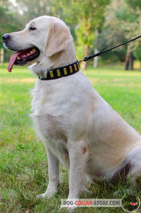 golden retriever collars buy black leather dogue de bordeaux collar brass plates