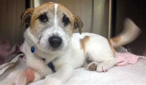 i want to adopt a puppy 7 things to consider before adopting a or puppy