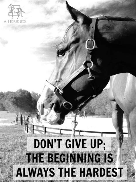 printable horse quotes i believe this describes solider and i to the t i need