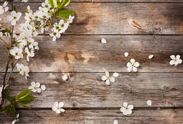 shop flowers  wooden background wallpaper  flowers leaves theme