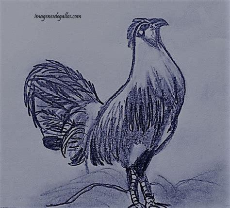 imagenes de gallos faciles para dibujar dibujos de gallos de pelea a lapiz imagenes de gallos