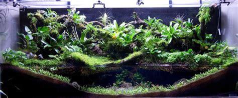 setup aquascape paludariums marsh like habitats for aquariums