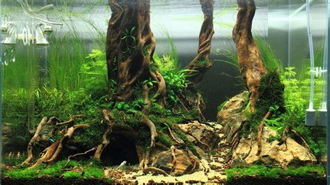 aquascape driftwood fishes aquariums fish tank setups planted aquarium tank