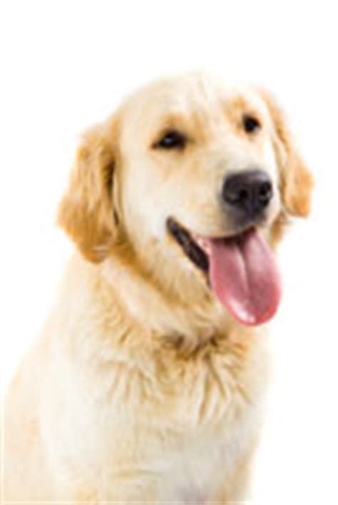 what causes puppy breath bad breath in dogs