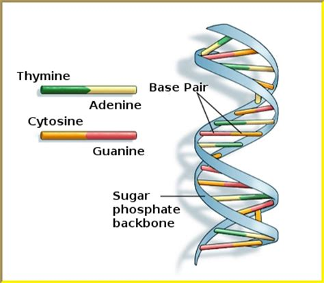 section of dna khq gene modified foods