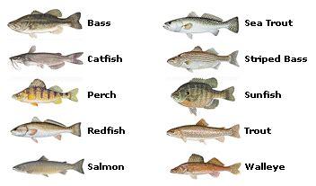 popular species: striped bass