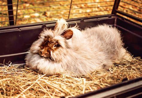 lettiere per conigli nani come abituare un coniglio nano alla lettiera