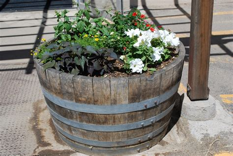 Oak Barrel Planter by Pl Box Oak Wine Barrel Planter The Redwood Store