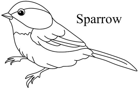 coloring page of house sparrow free coloring pages of bird sparrow