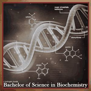 Bs In Biochemistry And Mba by Purbanchal