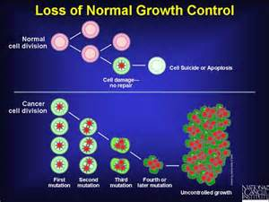 4 loss of normal growth control