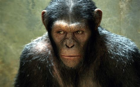 rise   planet   apes  wallpapers hd