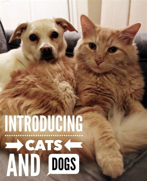 8 Reasons Cats Make Great Companions by 1000 Ideas About Cats And Dogs On Cat