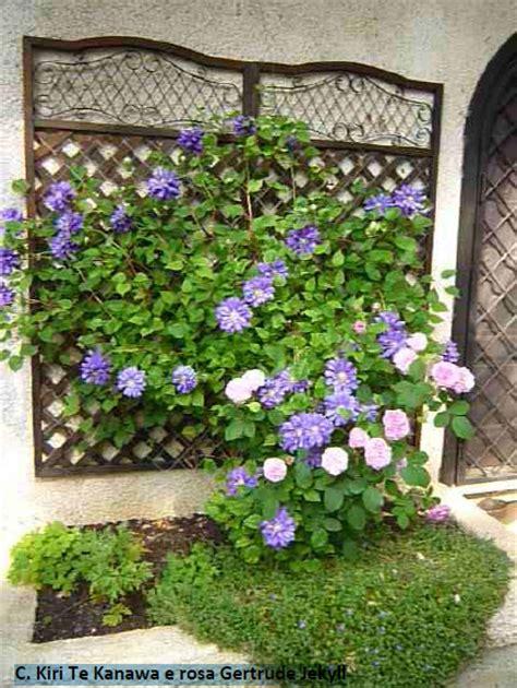 piante da terrazzo ricanti piante ricanti ricanti ricanti giardinaggio ricanti con