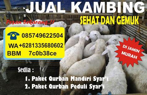 Sapi Qurban 2017 Murah Berkah jual kambing murah di malang 2016