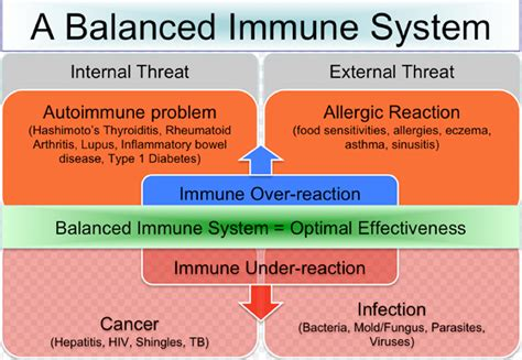 Can Detox Weaken Your Immune System by Cannabinoids And The Immune System Immuno Cannabinoid
