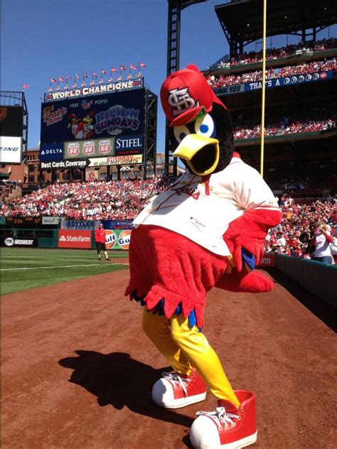 St Baseball fredbird st louis cardinals mascot mlb mascots