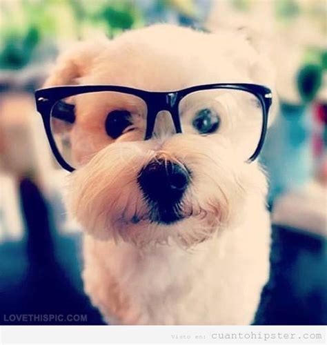 imagenes hipster tumblr animales bich 243 n malt 233 s gafapasta 161 me lo como con patatitas