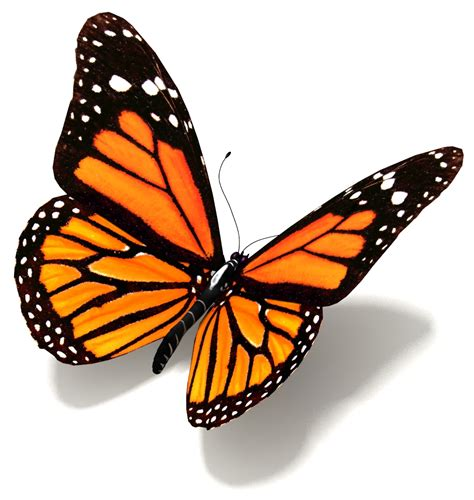 and butterfly butterfly orange children are butterflies