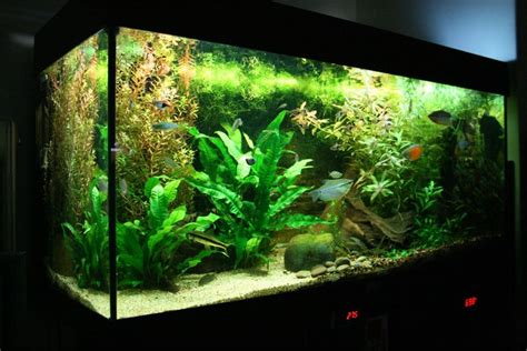 american aquascapes the art of aquascaping a beginners guide to aquascaping