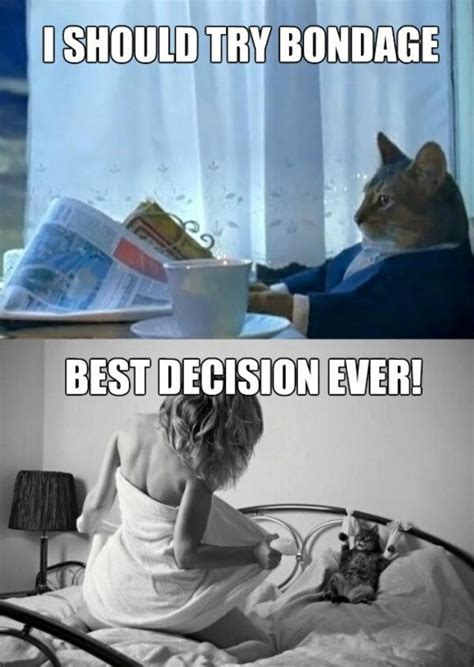 Cat Meme I Should Buy A Boat - image 678377 i should buy a boat cat know your meme
