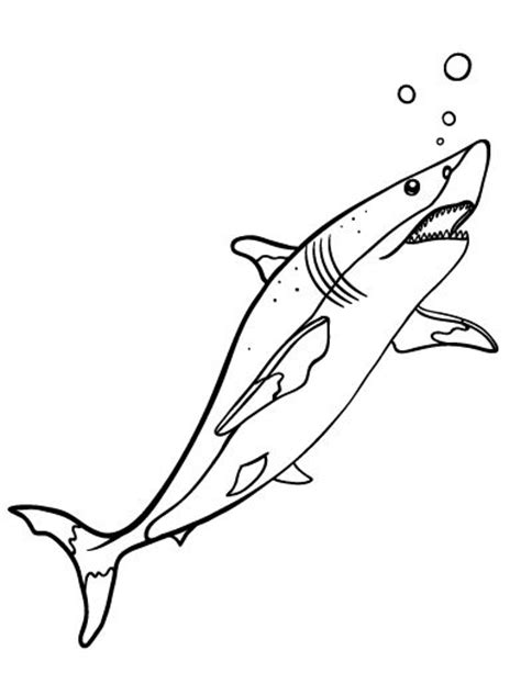 shark coloring pages pdf printable shark coloring page free pdf download at http