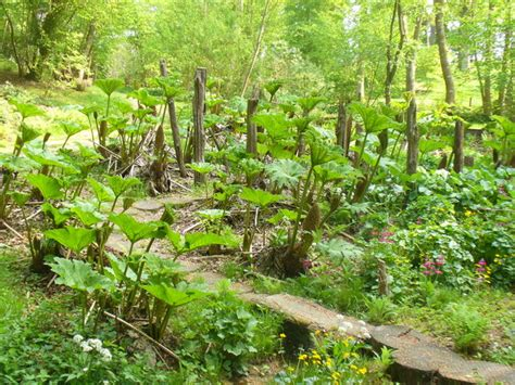 Bog Garden by Bog Garden C Colin Smith Geograph Britain And Ireland