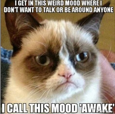 Grumpy Kitty Meme - grumpy mood quotes quotesgram