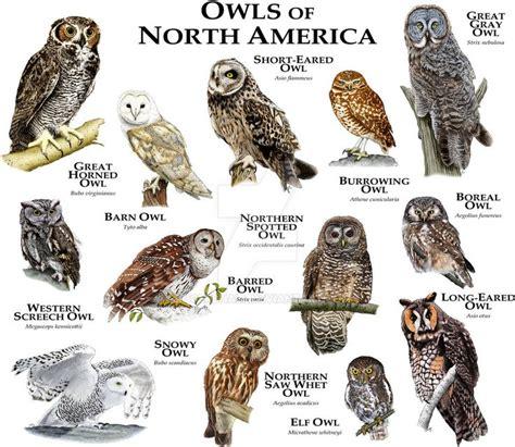 25 best owl species ideas on pinterest owls beautiful