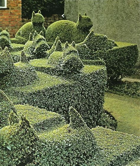 hedge topiary incredibly cool topiary hedges killer views