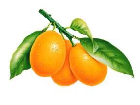 windows7 desktop wallpaper free download orange fruit hd