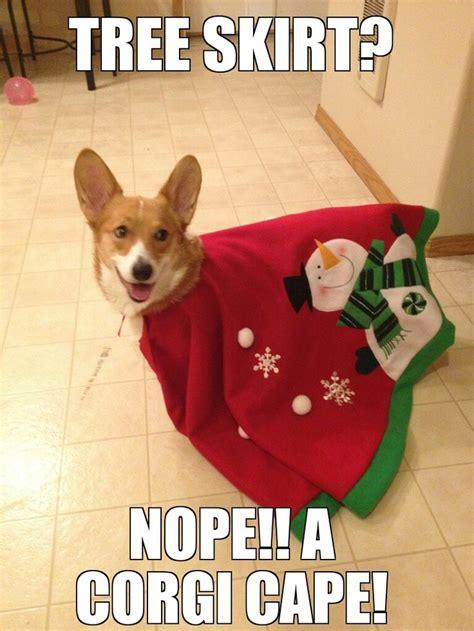 Cute Christmas Meme - 202 best corgi meme images on pinterest corgis corgi