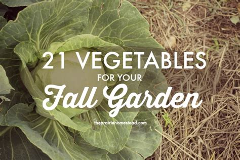 21 Vegetables For The Fall Garden Fall Garden Vegetables