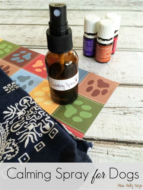 calming essential oils for dogs calming spray for dogs miss molly says