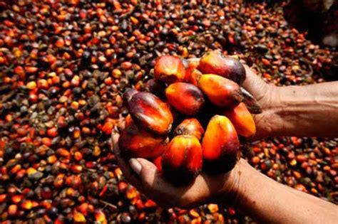 Minyak Kelapa Sawit Turun malaysia naikkan cukai eksport minyak kelapa sawit