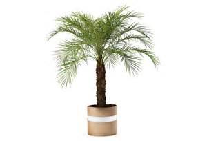 Palm Tree Bathroom Decor » Modern Home Design