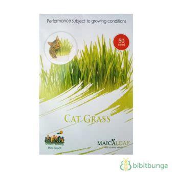 1pack Tanaman Rumput Kucing Cat Grass benih cat grass rumput kucing 50 biji maica leaf bibitbunga