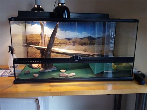bearded dragon basking light new hide introduced spending too much time in it
