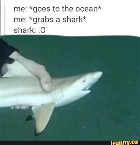 Meme Shark - best 25 shark meme ideas on pinterest funny sharks