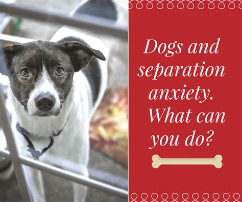 how do you a with separation anxiety and separation anxiety what can you do stressed help cope with