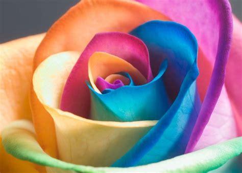 fiori bellissimi foto i fiori pi 249 belli al mondo saranno sempre quelli dell