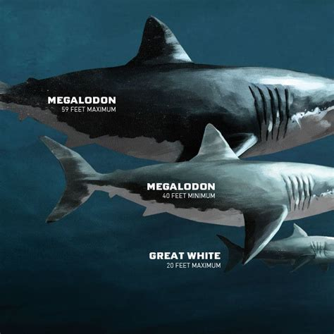 megalodon shark size the 25 best ideas about megalodon on pinterest