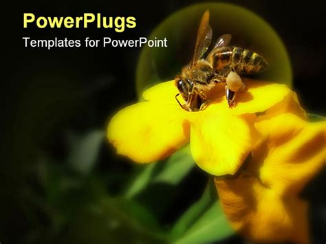 bee powerpoint template bee collecting honey on yellow flower isolated