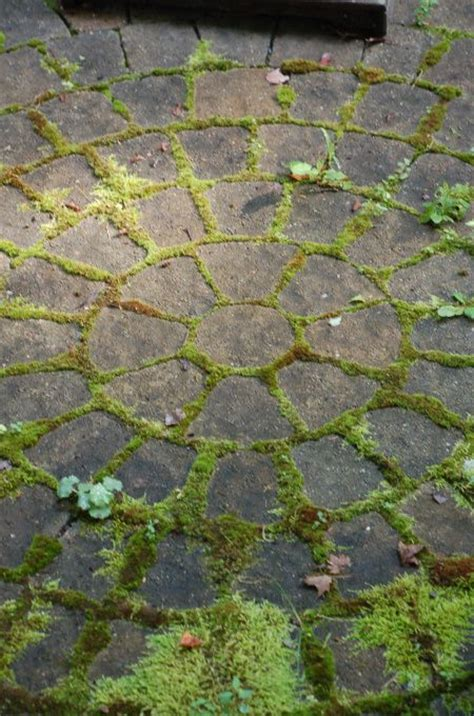 Patio Pavers With Moss In Between 69 Best Images About Spiral Patios On