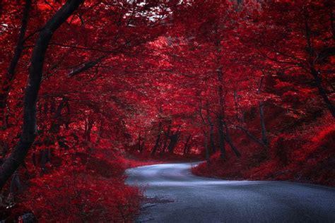 imagenes de otoño en japon camino a trav 233 s de 225 rboles rojos en oto 241 o jap 243 n 74030